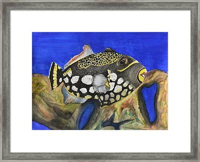 Clown Triggerfish Framed Print by Linda Brody