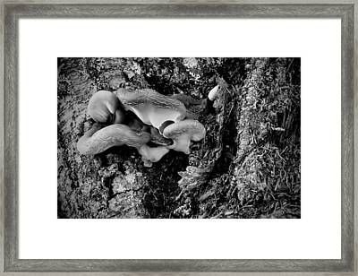 Cluster Of Fungi  2 Bw Framed Print by Phyllis Taylor