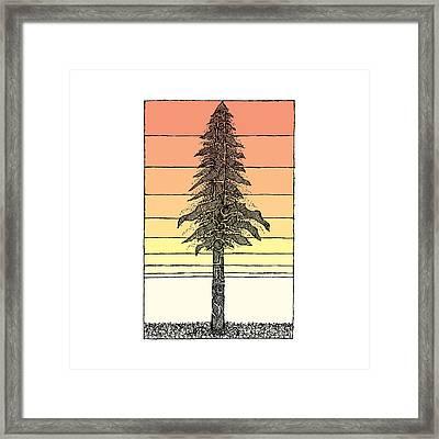 Coastal Redwood Sunset Sketch Framed Print by Hinterlund