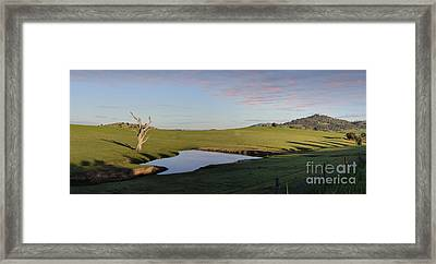Cockatoos Roost At A Watering Hole Wyangala Framed Print by Leah-Anne Thompson