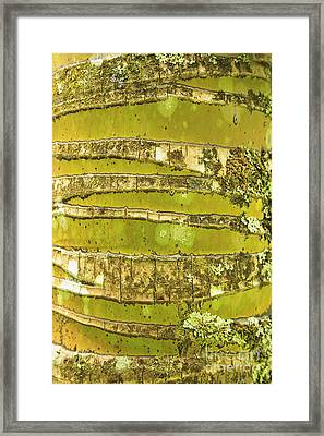 Coconut Palm Bark 1 Framed Print by Brandon Tabiolo - Printscapes