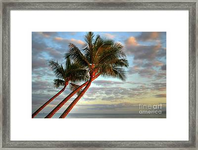 Coconut Palms Framed Print by Kelly Wade