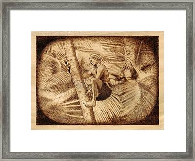 Coconut Plucking Framed Print by Conrad  Pinto