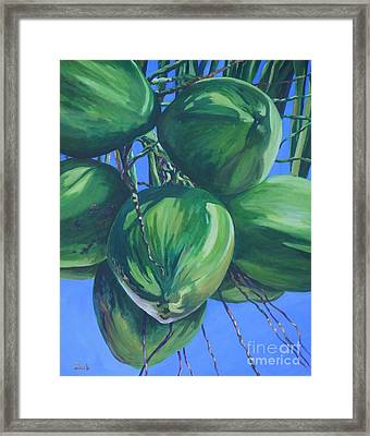 Coconuts In A Palm Tree Framed Print by John Clark