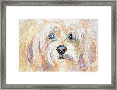 Cody Dog Framed Print by Kimberly Santini