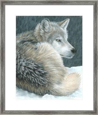 Cold Evening Framed Print by Carla Kurt