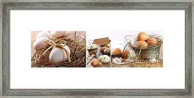 Collage Of Assorted Egg Images  Framed Print by Sandra Cunningham
