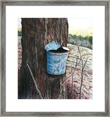 Collecting The Maple Sap Framed Print by Kathy Roberts