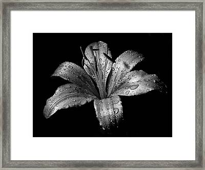 Collection Framed Print by Photograph by Ryan Brady-Toomey