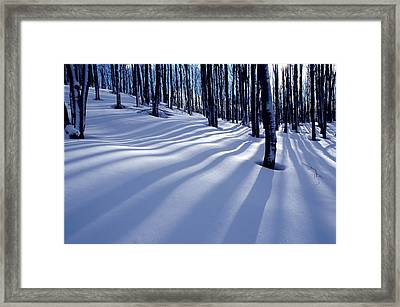 Collingwood Trees Framed Print by Peter Bowers