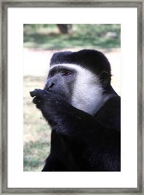 Colobus Monkey Framed Print by Aidan Moran