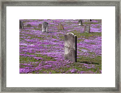 Colonial Tombstones Amidst Graveyard Phlox Framed Print by John Stephens