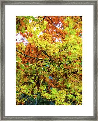 Color Change Of Autumn Leave 1 Framed Print by Lanjee Chee