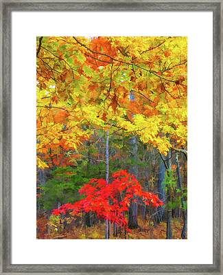 Color Change Of Autumn Leave 2 Framed Print by Lanjee Chee