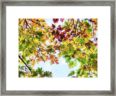 Color Change Of Autumn Leave 3 Framed Print by Lanjee Chee
