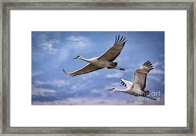 Colorado Air Aerobics  Framed Print by Janice Rae Pariza