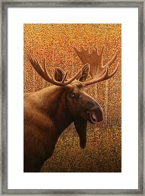 Colorado Moose Framed Print by James W Johnson