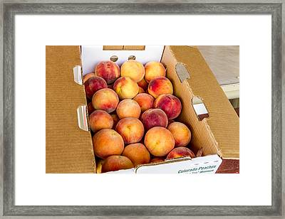 Colorado Peaches Ready For Market Framed Print by Teri Virbickis