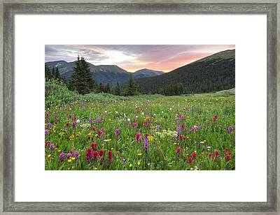 Colorado Wildflowers Sunrise At Butler Gulch 5 Framed Print by Rob Greebon
