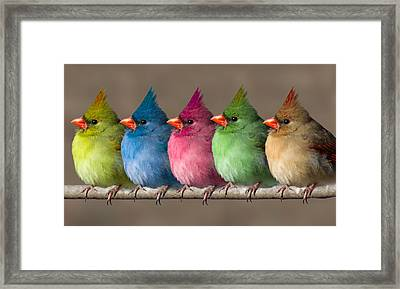 Colored Chicks Framed Print by John Haldane
