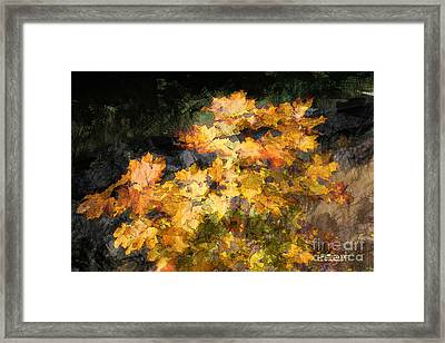 Colored Maple Leaves Framed Print by Jutta Maria Pusl
