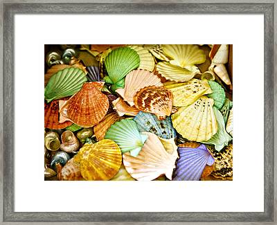 Colored Shells Framed Print by Marilyn Hunt