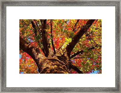Colorful Autumn Abstract Framed Print by James BO  Insogna