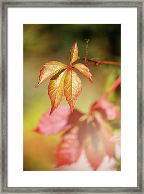 Colorful Autumn Framed Print by Cindy Grundsten