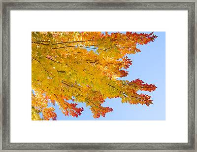 Colorful Autumn Reaching Out Framed Print by James BO  Insogna