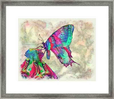 Colorful Butterfly 2 Framed Print by Jack Zulli
