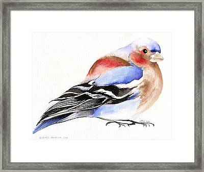 Colorful Chaffinch Framed Print by Nancy Moniz