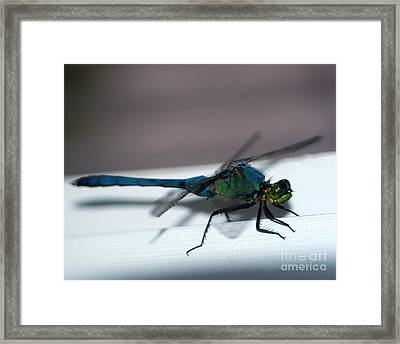 Colorful Dragon Framed Print by Clayton Bruster