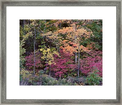 Colorful Fall Foliage Framed Print by Rona Black