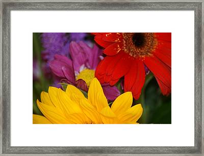 Colorful Flowers Framed Print by Liz Vernand