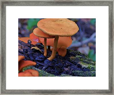 Colorful Mushrooms Framed Print by Robert Ulmer