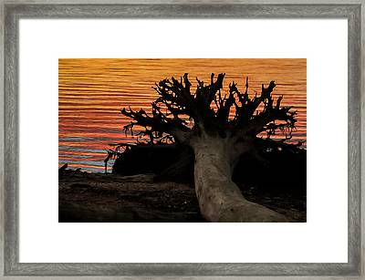 Colorful Roots Framed Print by Terry DeLuco
