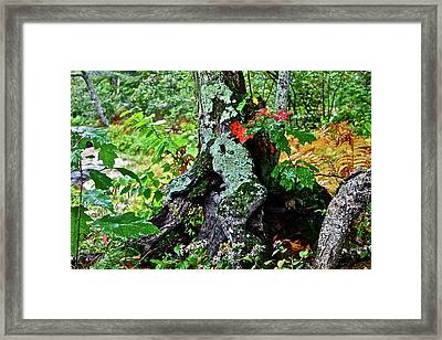 Colorful Stump Framed Print by Diana Hatcher