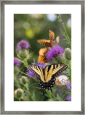 Colorful Summer Butterflies Framed Print by Lori Coleman