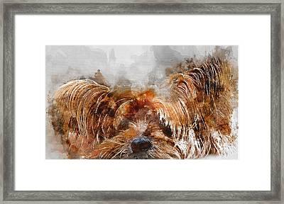 Colorful Yorkshire Terrier Dog Portrait - By Diana Van Framed Print by Diana Van