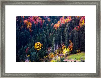 Colors Of Rhodope Framed Print by Evgeni Dinev