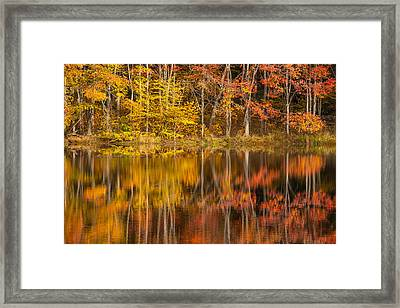 Colors Of The Season Framed Print by Karol Livote