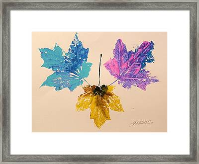 Colors You Might Miss Framed Print by John  Williams