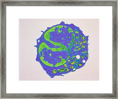 Coloured Tem Of A Section Through An Eosinophil Framed Print by Nibsc