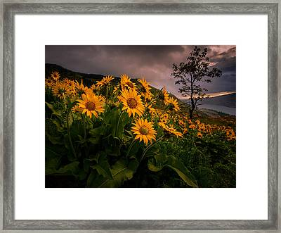 Columbia Gorge Joy Framed Print by Dan Mihai