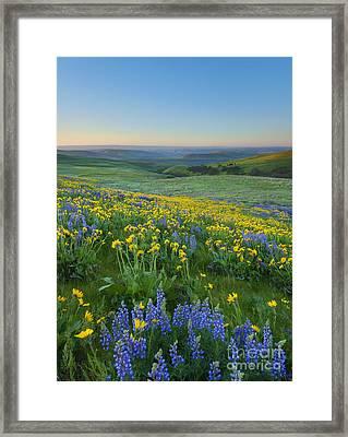 Columbia Hills Wildflower Dawn Framed Print by Mike Dawson