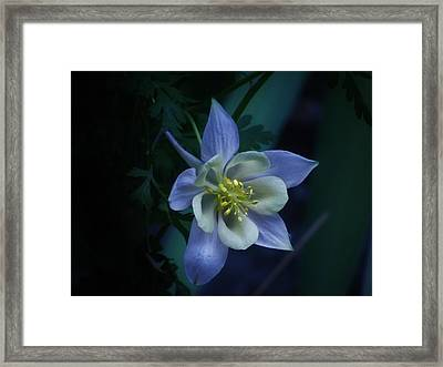 Columbine Mysterious Blue Framed Print by Barbara St Jean