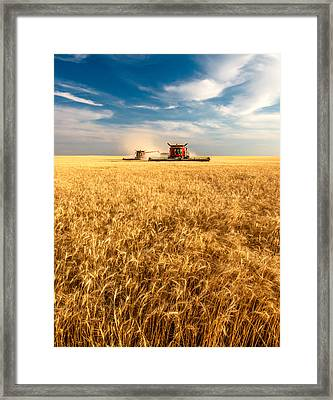 Combines Cutting Wheat Framed Print by Todd Klassy