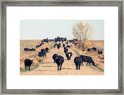 Coming Down The Road Framed Print by Todd Klassy