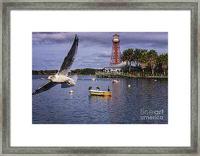 Coming In For A Landing  Framed Print by Mary Lou Chmura