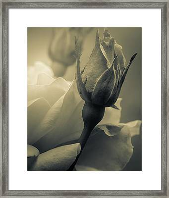 Coming Of Age Framed Print by Bob Orsillo